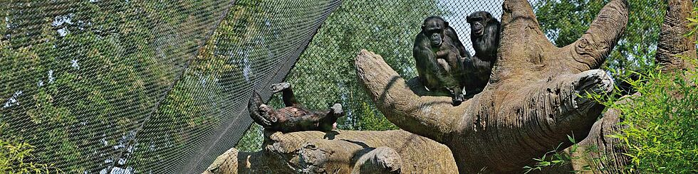 Monkey enclosure X-TEND stainless steel cable mesh