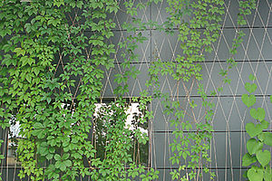 building protection green façades