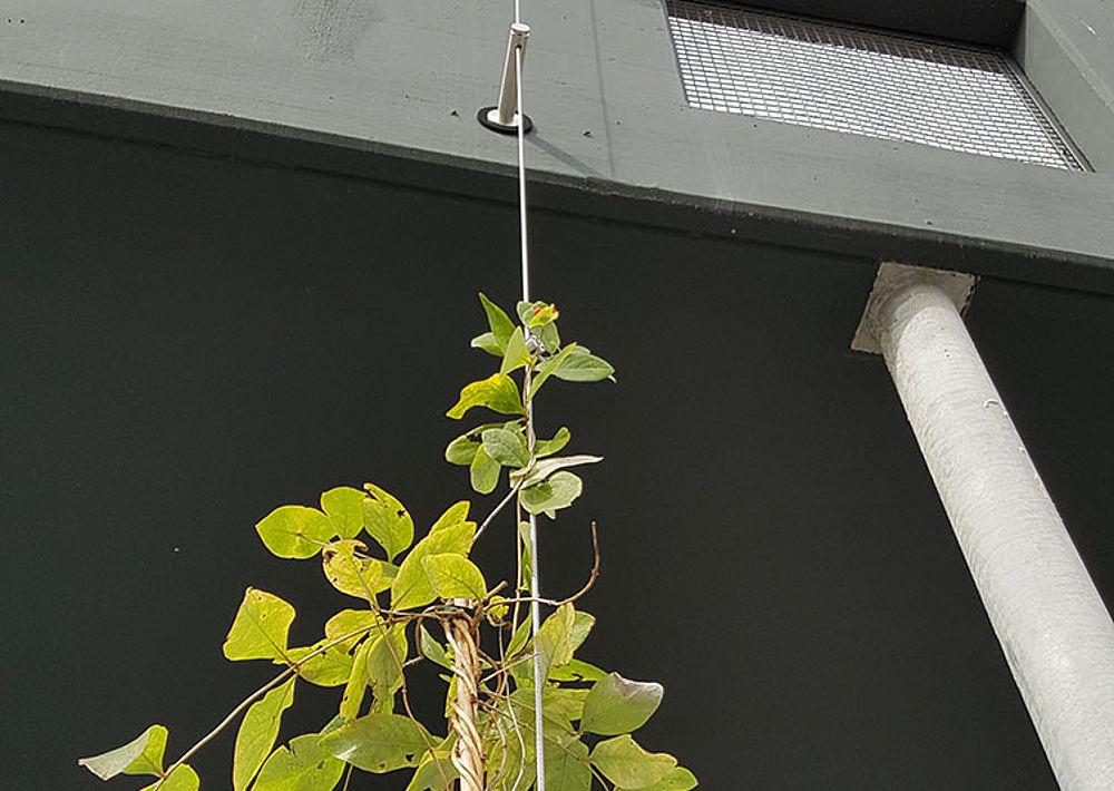 I-SYS Edelstahl-Seilsystem Rankhilfe
