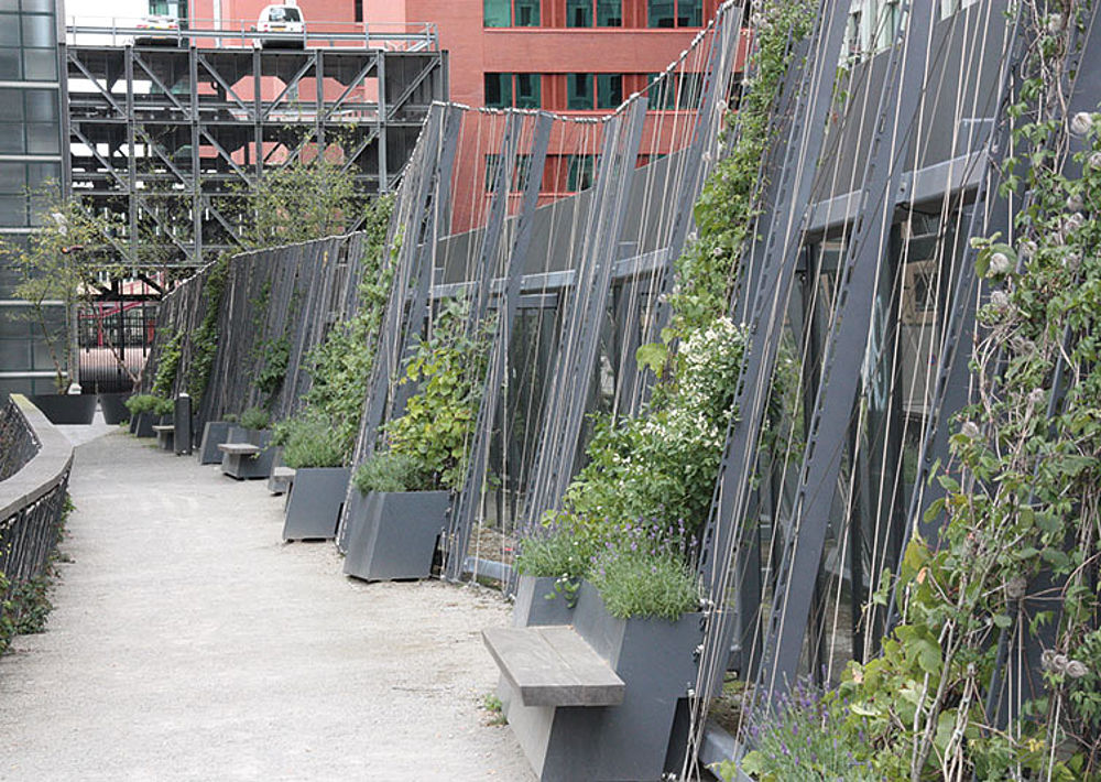 Greenery with I-SYS stainless steel wire ropes trellis