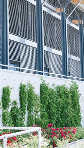 Blaufelden Mehrzweckhalle Begrünung Rankhilfen GREENCABLE