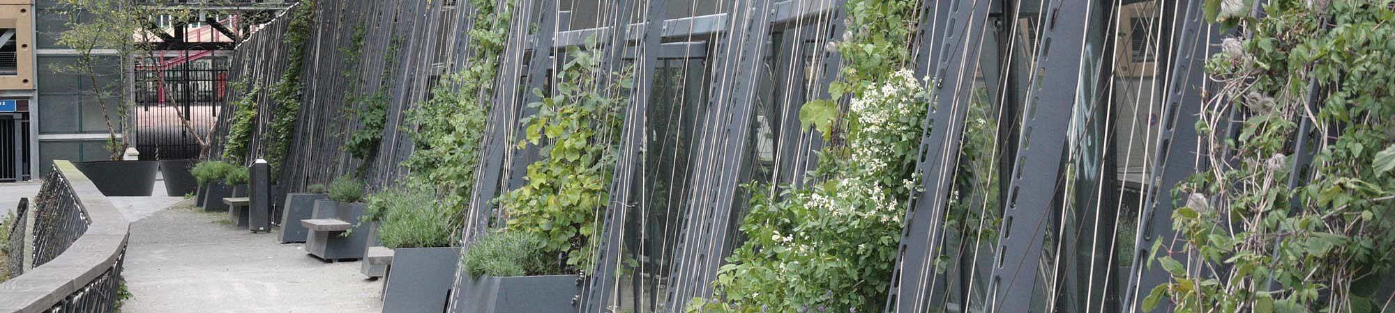 Ichtushof Begrünung I-SYS Edelstahl-Seilsystem