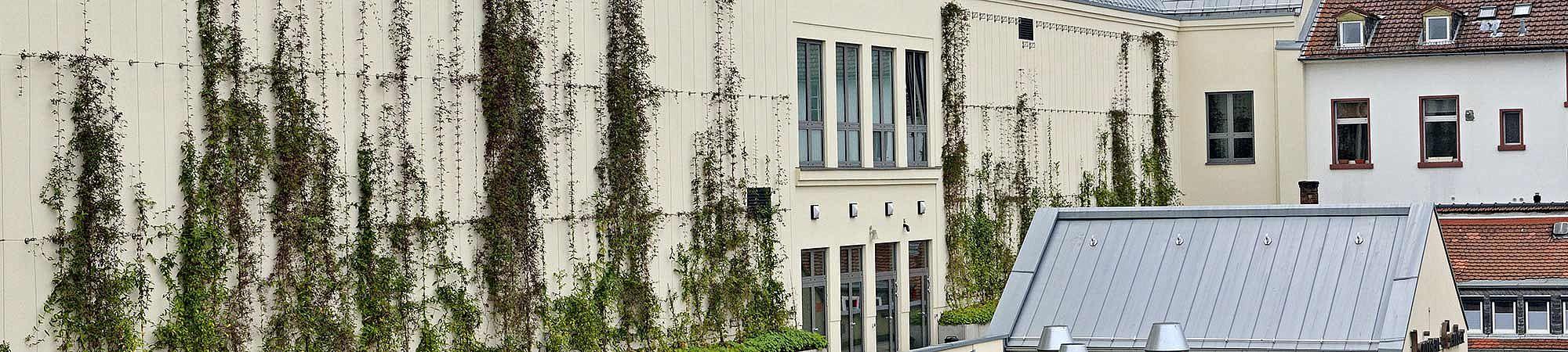 Bad Homburg Fassadenbegrünung I-SYS Edelstahl-seilsysteme