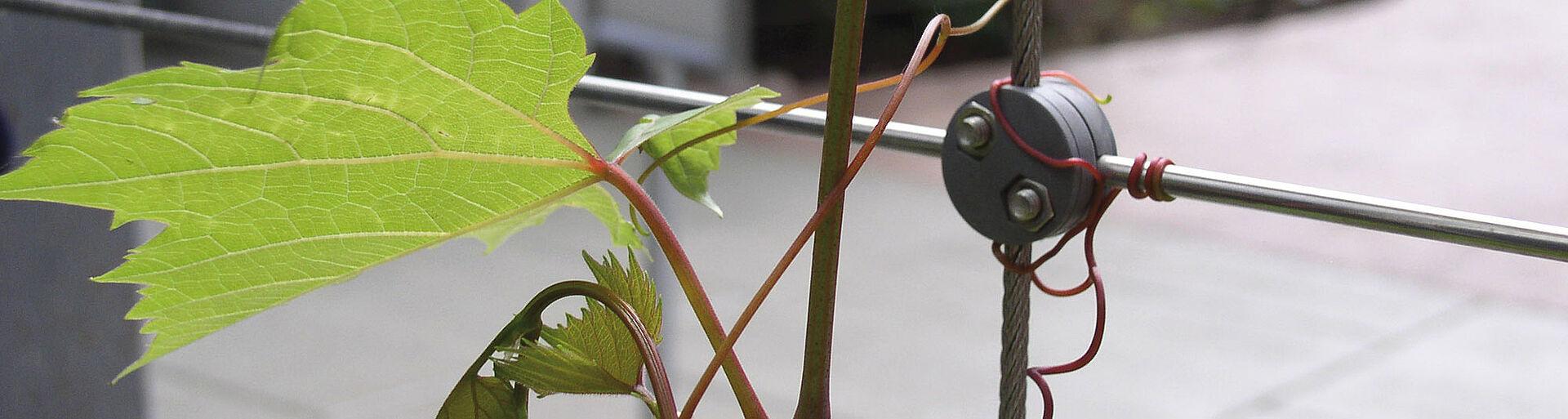 Rank und Kletterhilfe Edelstahl-Seilsysteme