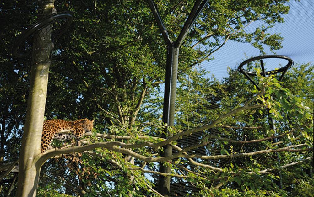 Natural environment predator enclosures