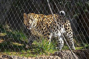 Leopards enclosure mesh sizes