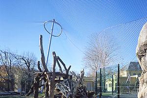 Schönbrunner Tiergarten Löwengehege