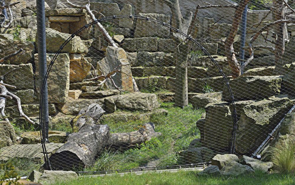 Revision openings predator enclosures