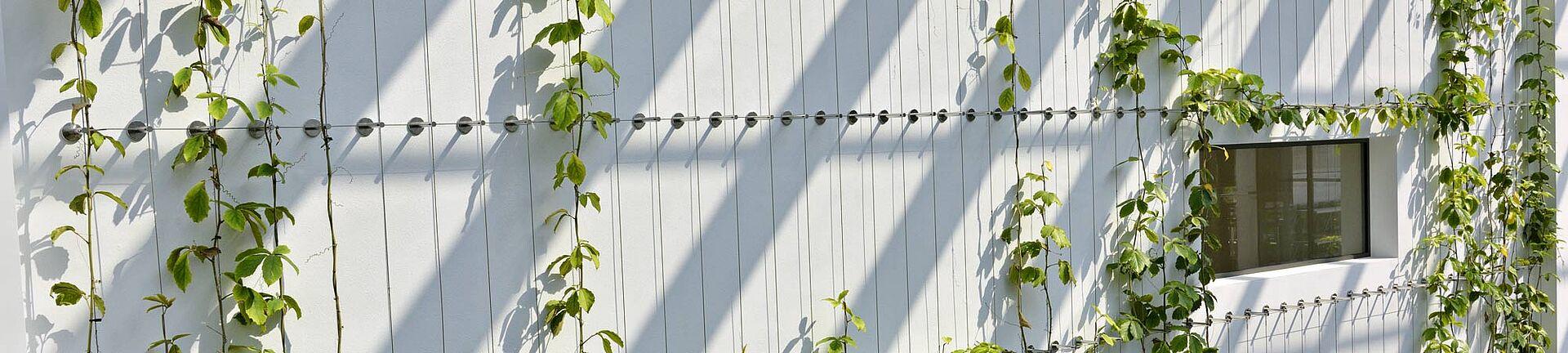 Baader Bank Begrünung I-SYS Edelstahl-Seilsystem