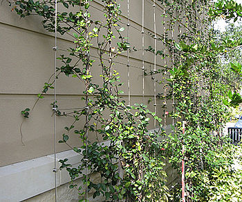 Greenery with I-SYS stainless steel wire rope systems