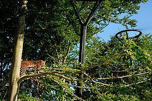 Reepark Ebeltoft Leopardengehege X-TEND Edelstahl Seilnetz