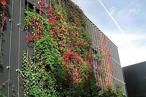Conservatoire Niedermeyer Greencable Fassadenbegrünung