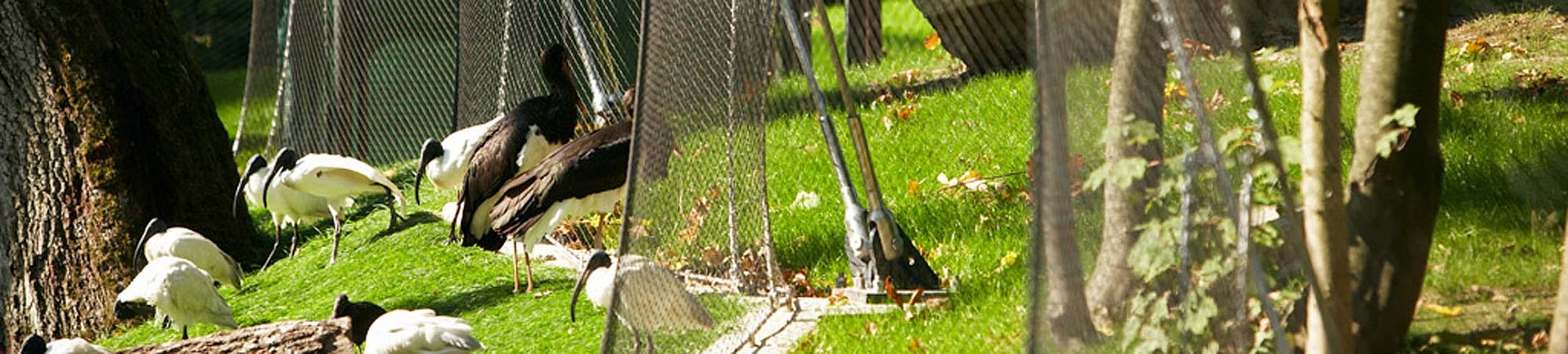 Opel-Zoo, begehbare Vogelvoliere