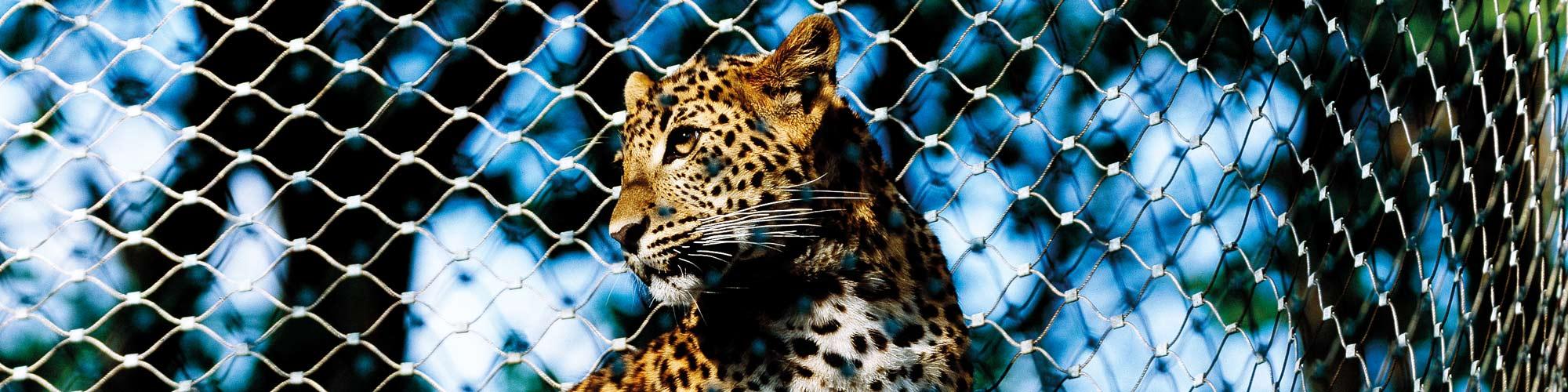 Predator enclosures Carl Stahl Architecture