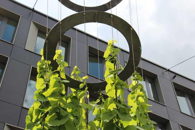 Begruenung Gestaltung I-SYS Edelstahl-Seilsysteme
