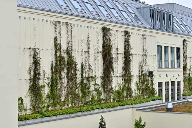 Begrünte Fassaden I-SYS Edelstahl Seilsystem